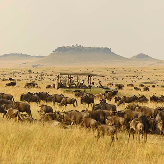 Information about Serengeti great wildebeest migration