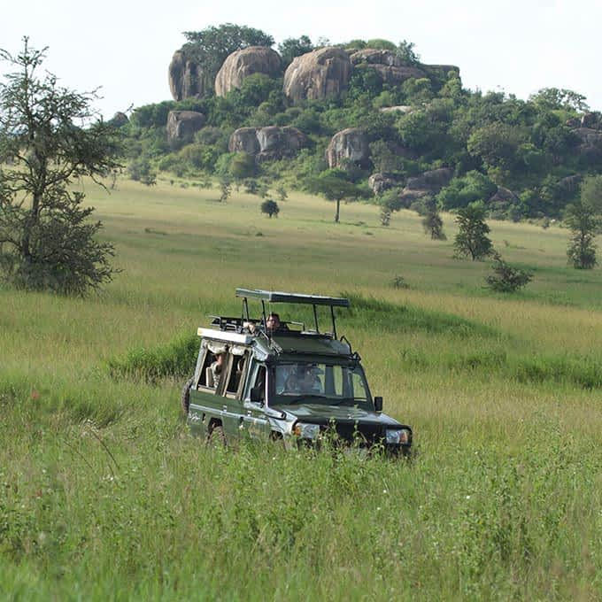 Game drive - information about Serengeti National Park