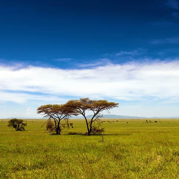Reasd more about Serengeti conservation