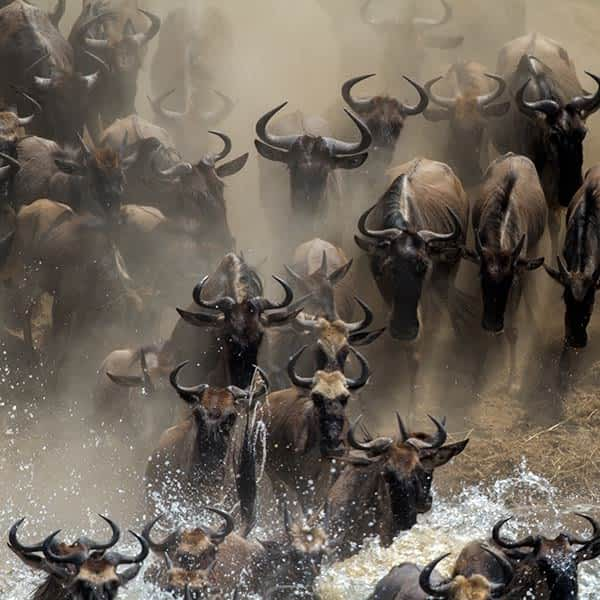 Read more about the Great Migration