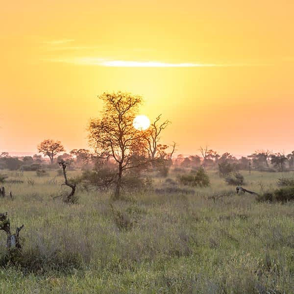 Read more about different Serengeti safari areas