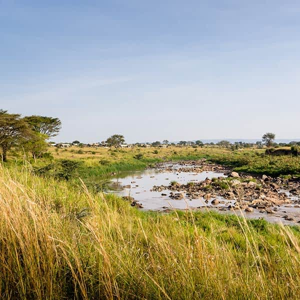 Read more about Serengeti Mara