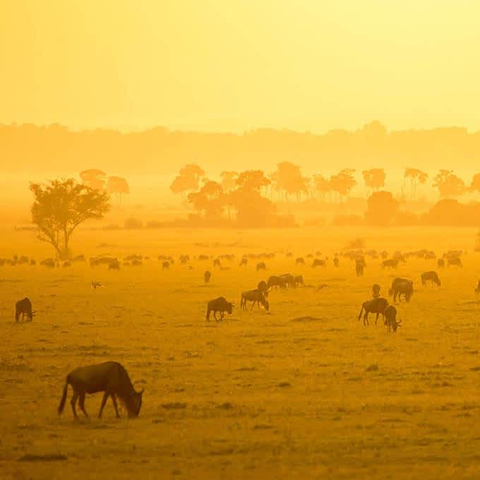 Chase the Great Migration in the Serengeti during your stay at Roving Bushtops in Tanzania