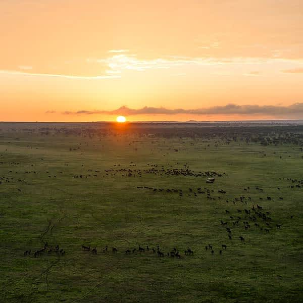 The Great Migration on the southeastern plains and Ndutu