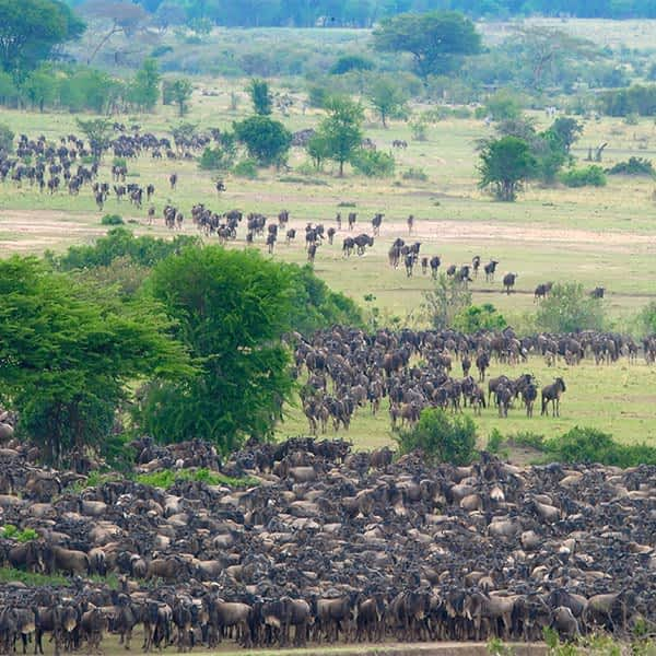 Great Migration information