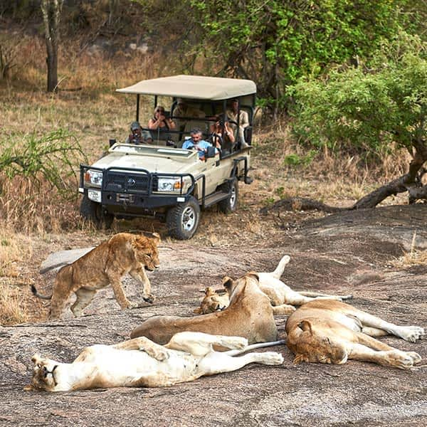 Lions around Ndutu and the southeastern plains