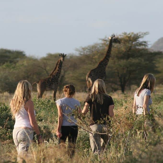 At Mwiba Lodge you can partake in a walking safari in the Greater Serengeti Area in Tanzania