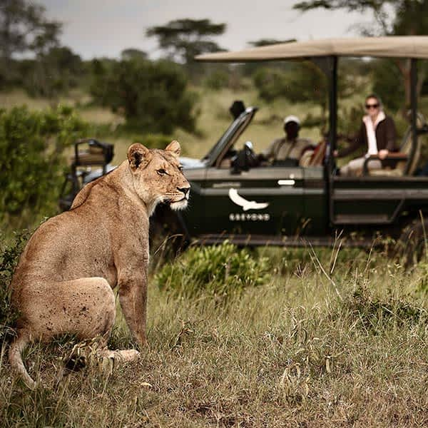 Safari game drive at Klein's Camp in Tanzania