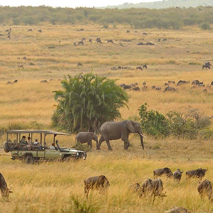 Serengeti game drive in Tanzania