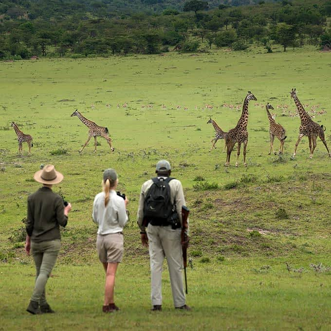 Enjoy a Serengeti walking safari at Klein's Camp