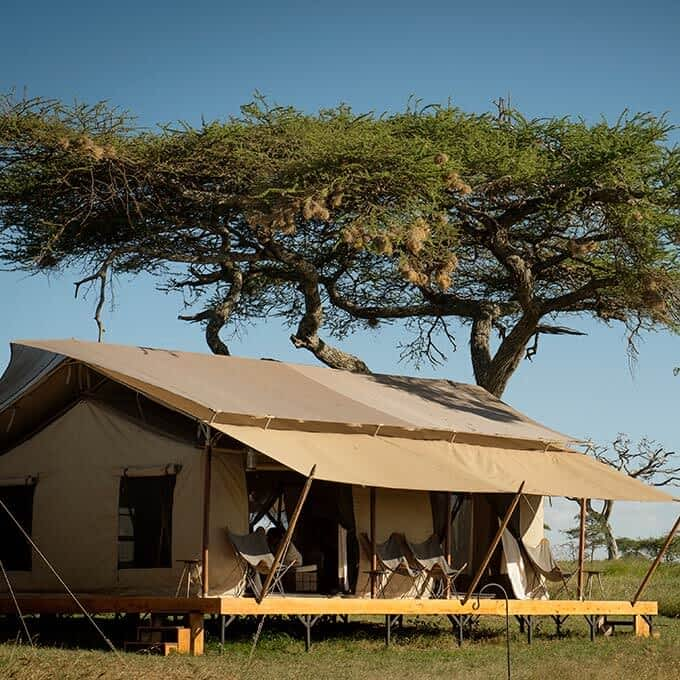 Luxury safari experience at Siringit Serengeti Camp in Tanzania