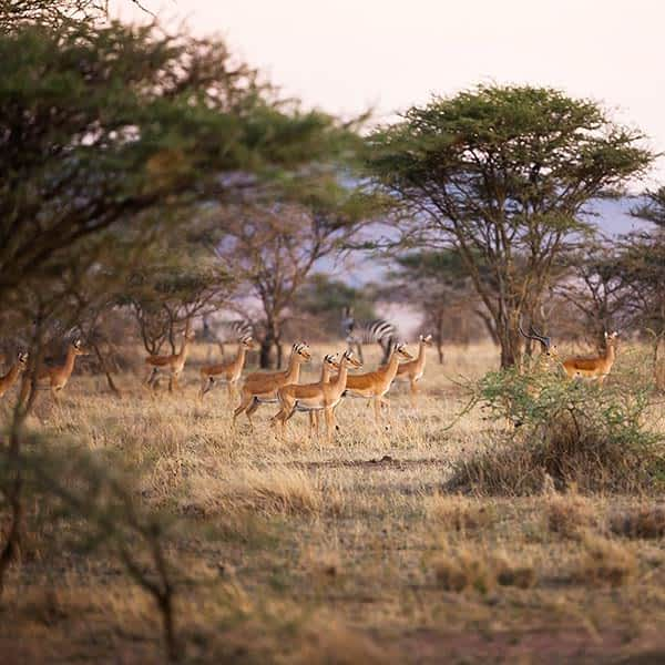 When to visit Serengeti