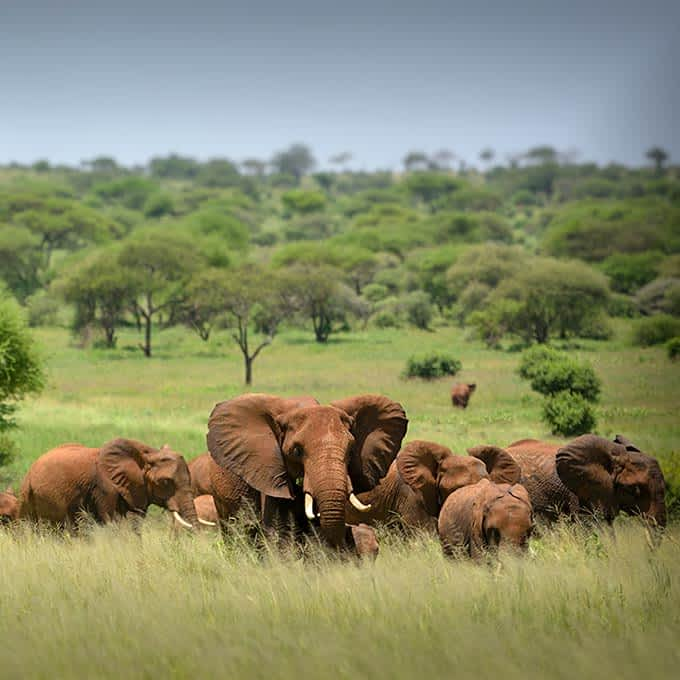 Wildlife in Serengeti National Park: elephants